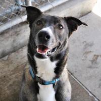 Adopt A Pet :: Sammi - Aberdeen, SD