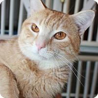 Adopt A Pet :: Nate - Erwin, TN