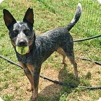 Adopt A Pet :: Takota - Killeen, TX