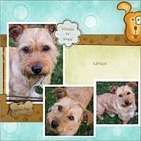 Adopt A Pet :: Ginger - Loma Linda, CA