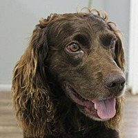 Adopt A Pet :: McGregor - Washington, DC