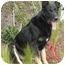 Photo 4 - German Shepherd Dog Mix Dog for adoption in Los Angeles, California - Shadow von Strasberg