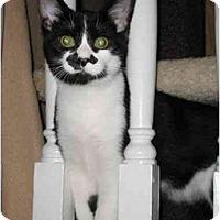Adopt A Pet :: Groucho - Cincinnati, OH