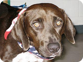 Labrador Retriever/Boxer Mix Dog for adoption in Port St. Joe, Florida - Drew