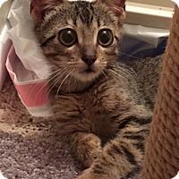 Adopt A Pet :: Reba - St. Louis, MO