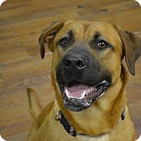 Adopt A Pet :: Trevor - Lake Odessa, MI
