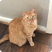 Adopt A Pet :: Rambo - Fort Worth, TX