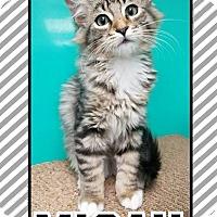 Adopt A Pet :: Micah - Edwards AFB, CA