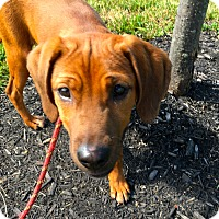 Adopt A Pet :: Flora: in Fairfax - Cincinnati, OH