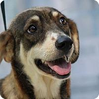 Adopt A Pet :: Aubrey - Yardley, PA