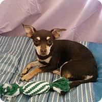 Adopt A Pet :: Charlotte - Rosemead, CA