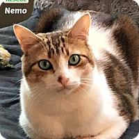 Adopt A Pet :: Nemo - Oakville, ON
