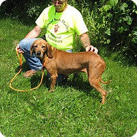 Adopt A Pet :: Lulu - Port Clinton, OH