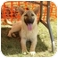 Photo 3 - German Shepherd Dog Mix Dog for adoption in Murfreesboro, Tennessee - Jagger