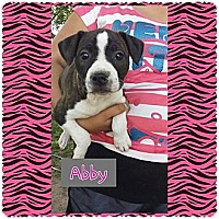 Adopt A Pet :: Abby - Fowler, CA