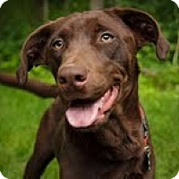 Adopt A Pet :: Baby Jane - Lewisville, IN