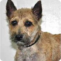 Adopt A Pet :: Ripple - Port Washington, NY