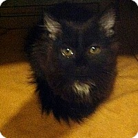 Adopt A Pet :: spike - Slatington, PA