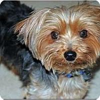Adopt A Pet :: BusterBoy - Greensboro, NC