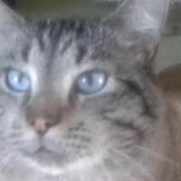 Adopt A Pet :: Lamont - Elk Grove, CA