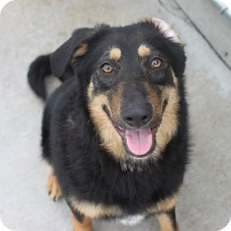 Shepherd (Unknown Type) Mix Dog for adoption in Naperville, Illinois - Marcy
