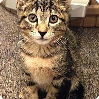 Adopt A Pet :: Marcie - N. Billerica, MA