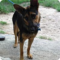 Adopt A Pet :: FRANNIE - SAN ANTONIO, TX