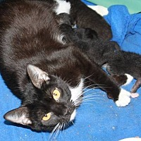 Adopt A Pet :: Kit - Stevensville, MD