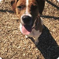 Adopt A Pet :: Carly @ Animal Shelter - Zanesville, OH
