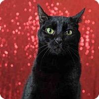 Adopt A Pet :: *PEPSI - Orlando, FL