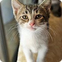 Adopt A Pet :: Toby - Lake Worth, FL