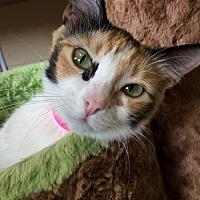Adopt A Pet :: Cali - Chula Vista, CA