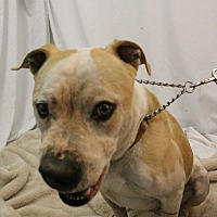 Adopt A Pet :: Hustler - Huachuca City, AZ