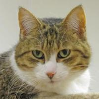 Adopt A Pet :: Queenie - Woodstock, IL