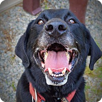 Adopt A Pet :: 💞Jet - CRANSTON, RI