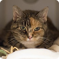 Adopt A Pet :: Rosie - West Chester, PA