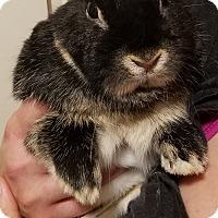 Adopt A Pet :: Bella and Peanut Butter - West Palm Beach, FL