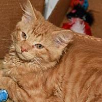 Adopt A Pet :: Will Turner - Brick, NJ
