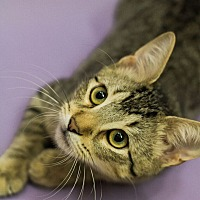 Adopt A Pet :: MORIARTY-FOUND WITH BROKEN HIP - Plano, TX