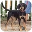 Photo 2 - Black and Tan Coonhound Mix Dog for adoption in Fincastle, Virginia - Sunshine