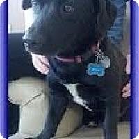 Adopt A Pet :: Jesse - Staunton, VA