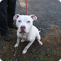 Adopt A Pet :: Hatten - Berlin, CT