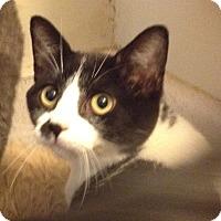 Adopt A Pet :: Cucumber - Santa Rosa, CA