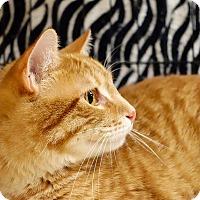 Adopt A Pet :: Sean - College Station, TX