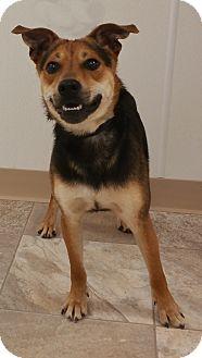 Beagle/German Shepherd Dog Mix Dog for adoption in Urbana, Ohio - Zip