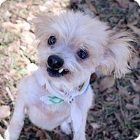 Adopt A Pet :: Teddy - Vidor, TX