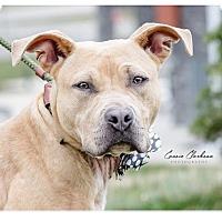 Adopt A Pet :: Elsa - Urgent! - Zanesville, OH