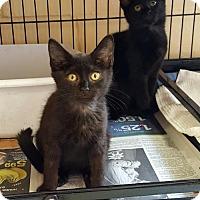 Adopt A Pet :: Cricket & Myster - Perth Amboy, NJ