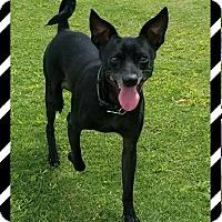Adopt A Pet :: Skeeter - Las Vegas, NV