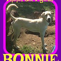 Adopt A Pet :: BONNIE - White River Junction, VT